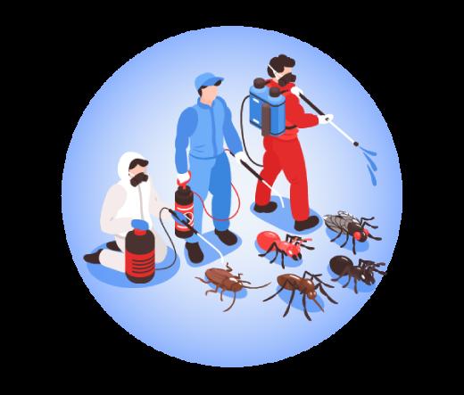 Best Pest Control Paddington