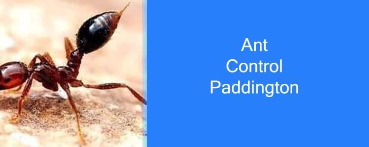 Ant Control Paddington