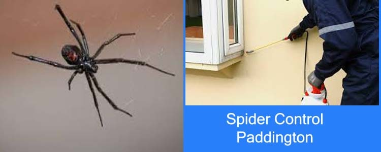 Spider Control Paddington