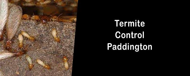 Termite Control Paddington